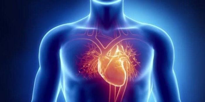 corazon-cuerpo-700x350